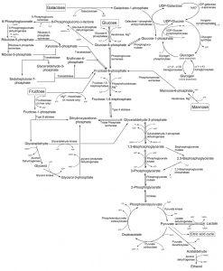 Glicólisis ATP Fisicoquímicos EDAR.