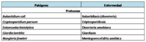 Tabla 1C - Protozoos - Fisicoquímicos EDAR.